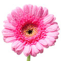 Closeup of a beautiful flower or macro shot pink Royalty Free Stock Images