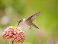 Closeup of a beautiful Hummingbird Stock Photos