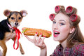 Closeup on beautiful young pinup woman in curlers eating a hot dog on a white background, dog looking at the camera Royalty Free Stock Photo