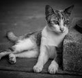 Closeup of the black white cutie small kitten background Stock Photo