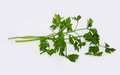 Closeup of blades of green parsley isolated on white background Royalty Free Stock Photo