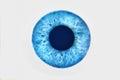 Closeup of blue eye on white background Royalty Free Stock Photo