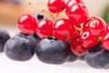 Closeup Of Blueberries And Redcurrants Stock Photography