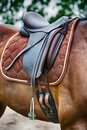Closeup of brown horse with saddle Royalty Free Stock Photo
