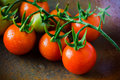 Closeup of cherry tomatoes on the vine Royalty Free Stock Photography