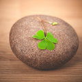 Closeup clover leaf . Royalty Free Stock Photo