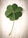 Closeup clover leaf on wooden heart background Royalty Free Stock Photo