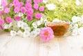 Closeup cup of tea. Royalty Free Stock Photo