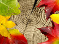 Closeup detail of wood with leaves macro and and leaf texture colorful background autumn is here Stock Photos