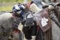 Closeup details of horse saddle Royalty Free Stock Photo