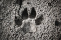 Closeup of dog footprint at the cracked ground. Royalty Free Stock Photo