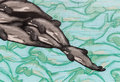 Closeup of dolphin graffiti Royalty Free Stock Photo