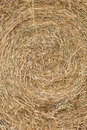 Closeup of dried hay texture