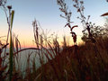 Closeup of dried prairie grass and flowers on side of hill overlooking Lake Michigan at sunset