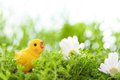 Closeup of easter chick on meadow Stock Images