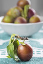 Closeup from ecological plums with a fruit bowl behind Stock Images