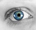 Closeup of the female eye Royalty Free Stock Photo
