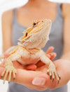 Closeup of female holding a bearded dragon Royalty Free Stock Photography