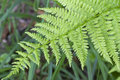 Closeup fern leaves Royalty Free Stock Photo
