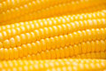 Closeup of Fresh corn on cobs on wooden table.