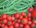 Closeup of fresh green beans and tomatoes just picked from the garden Royalty Free Stock Image