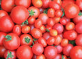 Closeup of Fresh Just Picked Tomatoes Royalty Free Stock Photo