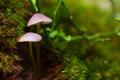 Closeup fungus in green moss Royalty Free Stock Photo