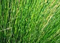 Closeup of Grass Stock Photography