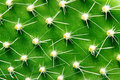 Closeup green cactus with needles pattern Stock Image