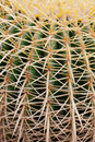 Closeup green cactus with needles pattern for background Stock Photography