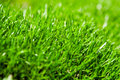 Closeup of green grass Royalty Free Stock Photography