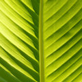 Closeup of a green leaf structure Royalty Free Stock Photography