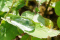 Closeup of green leaf with water drops Royalty Free Stock Photo
