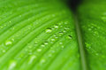 closeup green leaf water drops after rain Royalty Free Stock Photo