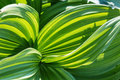 Closeup green leaves Royalty Free Stock Photo