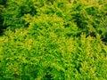 Closeup Of Green Leaves Tree O...
