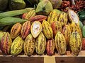 Group of colorful cocoa fruits with sliced Royalty Free Stock Photo
