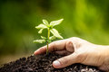 Closeup hand planting young tree in soil Royalty Free Stock Photo