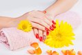 Closeup of hands of a woman with long red manicure polish on fingers nails Royalty Free Stock Images
