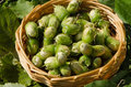 Closeup hazel nut wicker wooden dish leaf backdrop nuts in on leaves background Stock Photo