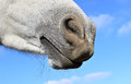 Closeup of horse nose over blue sky Royalty Free Stock Photo