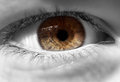Closeup of human eye Royalty Free Stock Photo
