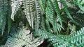 Closeup Illustration Of Green Fern Wild Leaf Royalty Free Stock Photo
