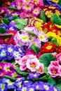 Closeup image of Beautiful flowers. Colorful floral background for greeting or postcards