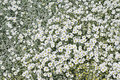 Closeup image of field of white grass plants with flowers in sunny day Stock Photo