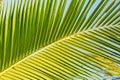 Closeup Of A Large Green Palm ...