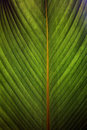 Closeup of a leaf Royalty Free Stock Photography