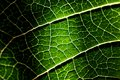 Closeup of a Leaf texture Stock Photos
