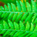 Closeup look of fern in forest Royalty Free Stock Photo