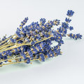 Closeup look of lavander on white background macro Royalty Free Stock Photos